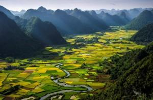 Opening of company providing marketing information services in Vietnam