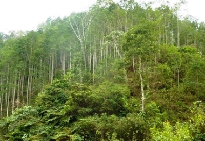 Fine of vnd 100,000 million for failing to pay the charge of forest environmental service