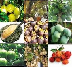Apply international standards, regional standards in agriculture